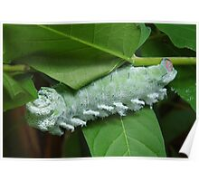 Giant Caterpillar  Poster