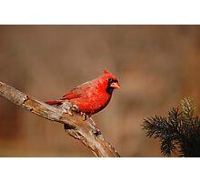 Go Cardinals! Photographic Print