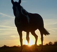 equus by Finnola