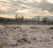 Snow Field by Olga Zvereva