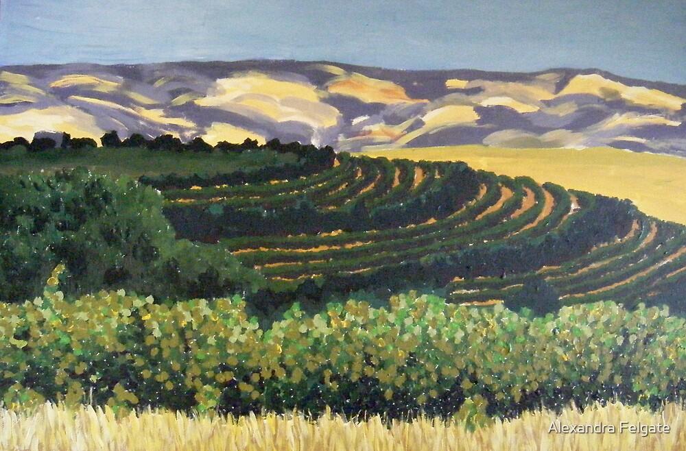 Rosemount Vineyards, McLaren Vale SA by Alexandra Felgate