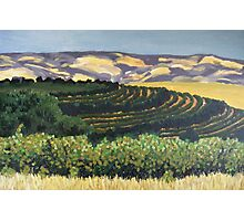 Rosemount Vineyards, McLaren Vale SA Photographic Print