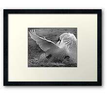 Feather Fight Framed Print