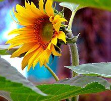Sunflower by Lynette Higgs