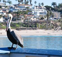 Pelican on the Pier by polylongboarder