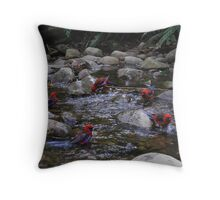 Circle of friends.  Parrots at Badgers Creek, Healsville Victoria.  Throw Pillow