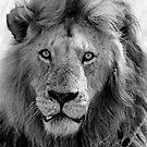 King  by CarolineB