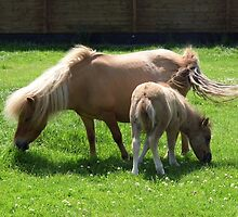 Mare and New Foal by LoneAngel