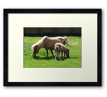 Mare and New Foal Framed Print