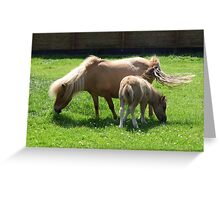 Mare and New Foal Greeting Card