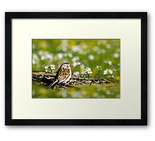 Field Sparrow Bird Art Framed Print