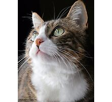 Queen of Cats Photographic Print