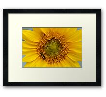Sunny Yellow Sunflower Heart with Black and Yellow Striped Wasp Framed Print