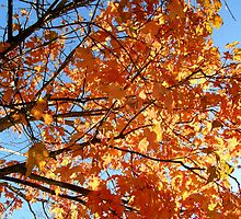 Fall Foliage  by godmommy5