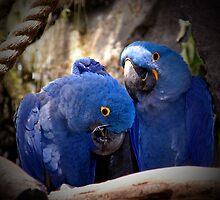 Blue Parrot Loving by godmommy5
