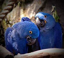 Blue Parrot Loving by godmommy5