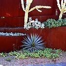 cactuses by glenda1998