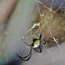 Spinnekop  by Karen01