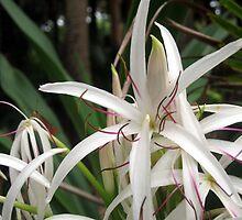 Australian Flora by Cheryl Parkes