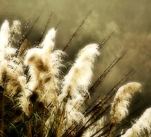 Pampas Grass #13 by Dave Rollins