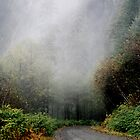 Foggy Mountain Road by Timothy Gass