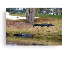 Alligator Hazard Canvas Print