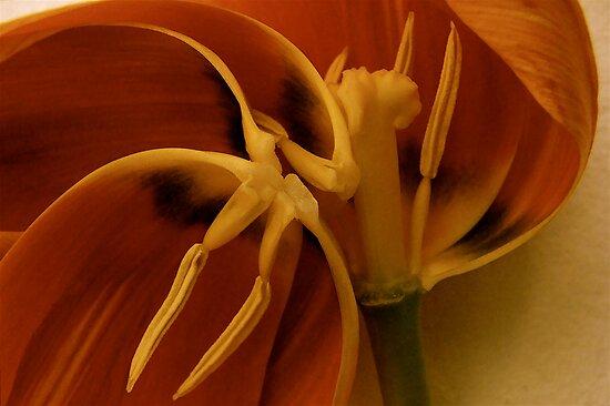 tulips hearth  by anisja