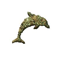 Drug Dolphin by yahyahyeet