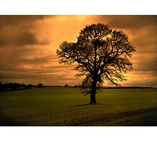 Lone tree at sunset Photographic Print