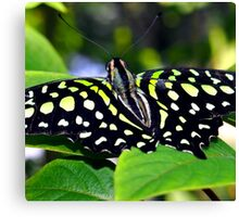 Green and Yellow Spotted Butterfly Canvas Print