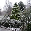 Snow in the Gardens by emanon