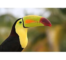 Colorful Tucan Photographic Print