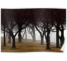 Trees in Fog on Lakeshore Drive Poster