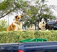 Hay!  We're waiting here..... by AuntDot