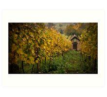 Vineyard Shed Art Print