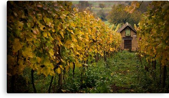 Vineyard Shed by Boston Thek Imagery