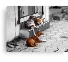 Shop Street Dogs Canvas Print
