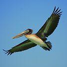 Pelican 2 by Bob Moore