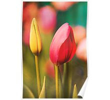 Vintage Tulips: Colors of Spring Poster
