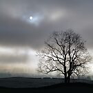 Out of the fog and little light by clickinhistory