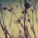 #006 by Paul Desmond