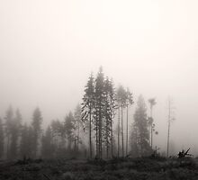 Misty Trees by CalleHoglund