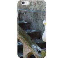 Confused Seagull iPhone Case/Skin