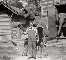Central Park Zoo Elephants, 1915 by historyphoto