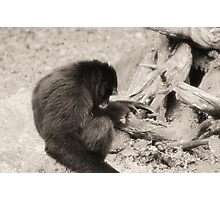 Howler Monkey Photographic Print