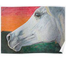 """Arabian Colors"" - Arabian stallion Poster"