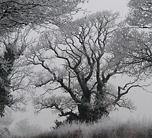fROSTY mORNING 01 by Sharon Perrett