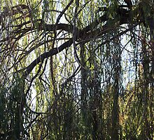 Weeping Willow by Laurie Puglia