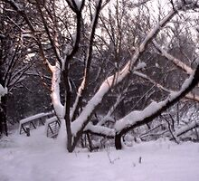 A Snowy Scene by notculpable