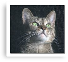 Dyna the cat Canvas Print